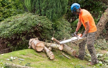 additional services offered by Derbyshire tree surgeons