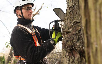 Derbyshire tree surgery costs