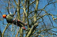 Derbyshire tree surgery services